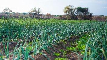 Paraná será sede este jueves de una jornada Hortícola y Agroactiva