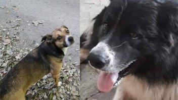 Ofrecen recompensa a quien aporte datos sobre el paradero de dos perros