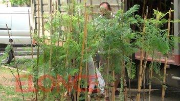 Plantarán 200 árboles en la Costanera Alta de Paraná