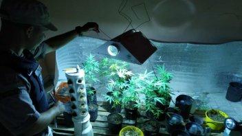 En la planta alta de la vivienda tenían un vivero de marihuana